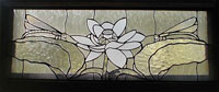 Clear Dragonfly